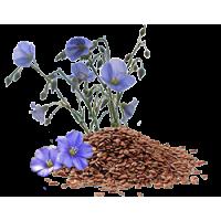 Зерно для проращивания, семена